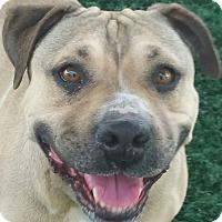 Adopt A Pet :: Ivy - Chula Vista, CA