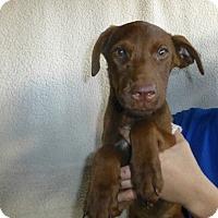 Adopt A Pet :: Cocoa - Oviedo, FL