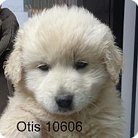 Adopt A Pet :: Otis - baltimore, MD
