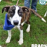 Adopt A Pet :: Brady - Kimberton, PA