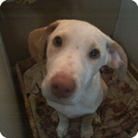 Adopt A Pet :: Sullivan - Homer, NY