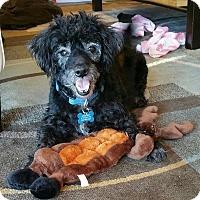 Adopt A Pet :: Rudolph - Waldorf, MD