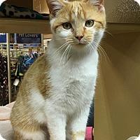 Adopt A Pet :: Winnie - Covington, KY