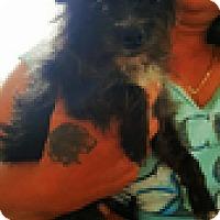 Adopt A Pet :: Miranda - Thousand Oaks, CA