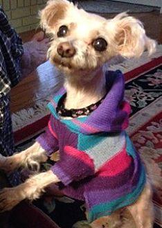 Maltese Dog for adoption in High Point, North Carolina - Penelope (NC)