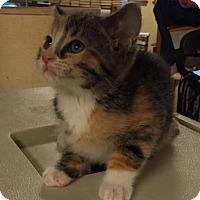 Adopt A Pet :: Kiera - Ortonville, MI