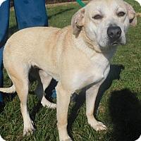 Adopt A Pet :: Tori - Rockville, MD