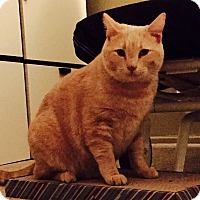 Adopt A Pet :: Jasper - Pasadena, CA