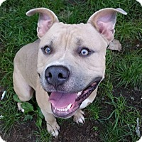 Adopt A Pet :: Moose - Cleveland, OH