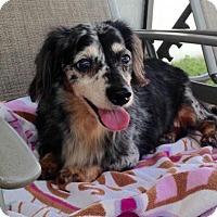 Adopt A Pet :: George - Jacksonville, FL