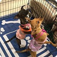Adopt A Pet :: Cammy - Phoenix, AZ