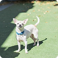 Adopt A Pet :: Oliver - San Francisco, CA