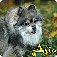Adopt A Pet :: Asia - Kamloops, BC