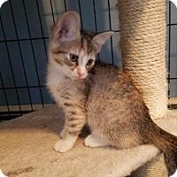 Adopt A Pet :: Dory C1554 - Shakopee, MN