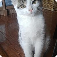 Adopt A Pet :: Destiny - Baltimore, MD