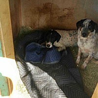 Adopt A Pet :: D.O.G. - San antonio, TX
