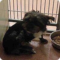 Adopt A Pet :: PIXIE - North Ogden, UT