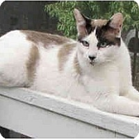 Adopt A Pet :: Prophet - Davis, CA
