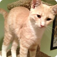 Adopt A Pet :: Colby - East Hanover, NJ