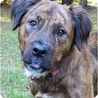 Adopt A Pet :: Amie - Mocksville, NC