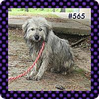 Adopt A Pet :: GUNNER/JAX - W. Warwick, RI