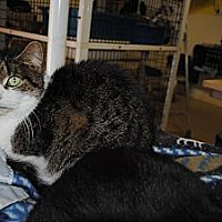 Adopt A Pet :: Mystic - Bay City, MI