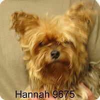 Adopt A Pet :: Hannah - baltimore, MD