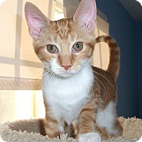 Adopt A Pet :: Kennie - Colmar, PA