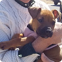 Adopt A Pet :: Lil' Bit - Holmes Beach, FL