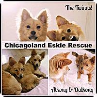 Adopt A Pet :: The Twinns - Elmhurst, IL
