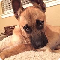 Adopt A Pet :: Kiska - Austin, TX
