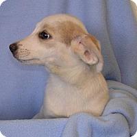 Adopt A Pet :: Betty - Yucaipa, CA