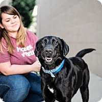 Adopt A Pet :: Shadow - Foster Care - Chino Hills, CA