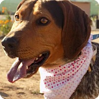 Adopt A Pet :: ARrOoo - Apple Valley, CA
