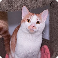 Adopt A Pet :: Findley - Seville, OH