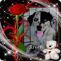 Adopt A Pet :: River - Crowley, LA