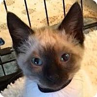 Adopt A Pet :: Carson (black collar) - Palo Alto, CA