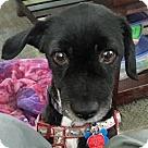 Adopt A Pet :: Jacob