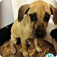 Adopt A Pet :: Willy - Kimberton, PA