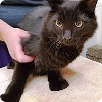 Adopt A Pet :: Ambrosia - Kalamazoo, MI