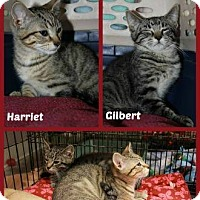 Adopt A Pet :: Gilbert - New Richmond,, WI