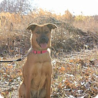 Adopt A Pet :: Roxy - Duchess, AB