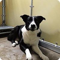 Adopt A Pet :: Duke - Van Wert, OH