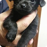 Adopt A Pet :: Truro - Alexandria, VA