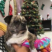 Adopt A Pet :: Mona - Visalia, CA