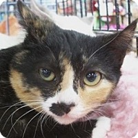 Adopt A Pet :: Turtle - Castro Valley, CA