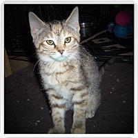 Adopt A Pet :: ARIA - Medford, WI