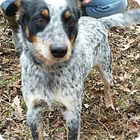 Adopt A Pet :: Miller~adopted! - Glastonbury, CT
