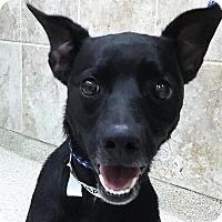 Adopt A Pet :: Brett (Oswego) - Oswego, IL