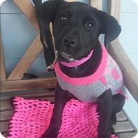 Adopt A Pet :: LuLu - El Cajon, CA